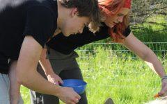 """Junior Zak Kegg and tutor Julie Genovese feed their Kunekune pigs, """"Boojee"""" and """"Meatlug."""""""