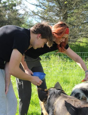 "Junior Zak Kegg and tutor Julie Genovese feed their Kunekune pigs, ""Boojee"" and ""Meatlug."""